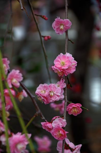 140311_香取神社4.jpg