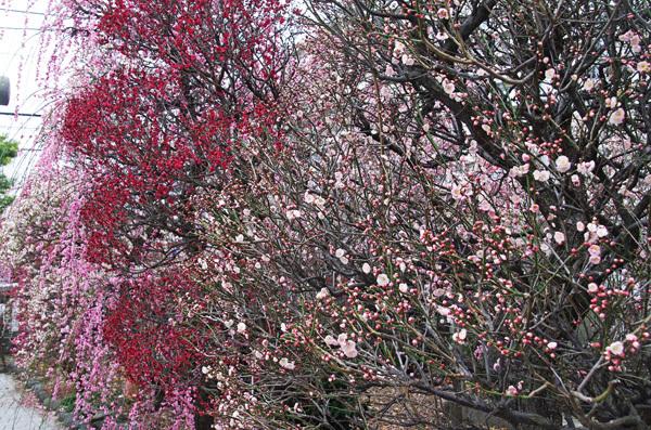 140311_香取神社7.JPG