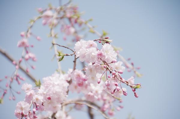 140528_目黒天空庭園2.JPG