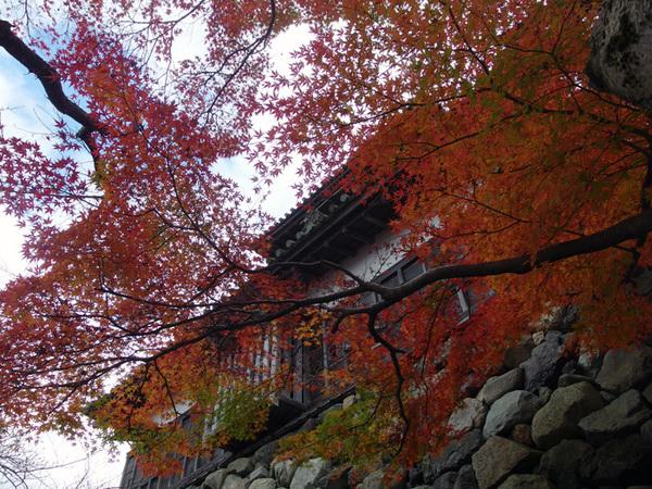 151201_丸岡城6.JPG