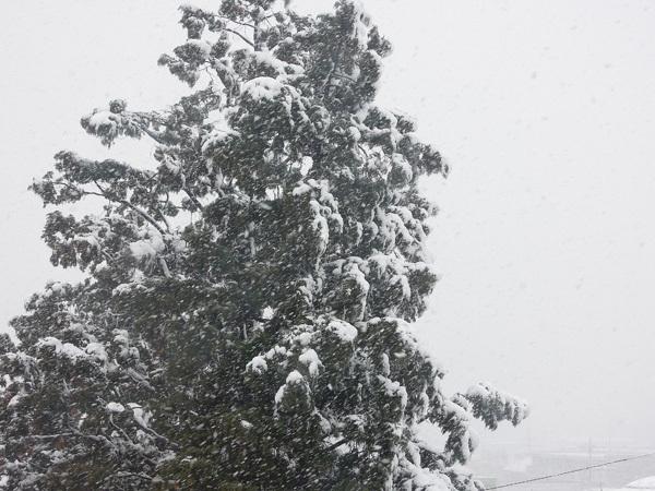 2012.3.1昨日の大雪.jpg